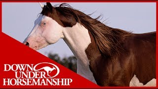 Clinton Anderson Presents: Titan a Legend in the Making, Lesson 13, Part 3 - Downunder Horsemanship