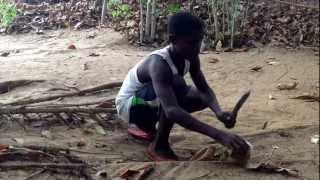 fresh coconut on the beach in Liberia- קוקוס ישר מהעץ בחופים של ליבריה.