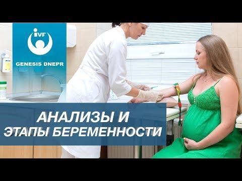 Этапы беременности и обязательные обследования беременной женщины. Гинекология и акушерство