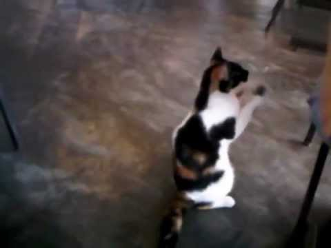 Image result for kucing minta makan