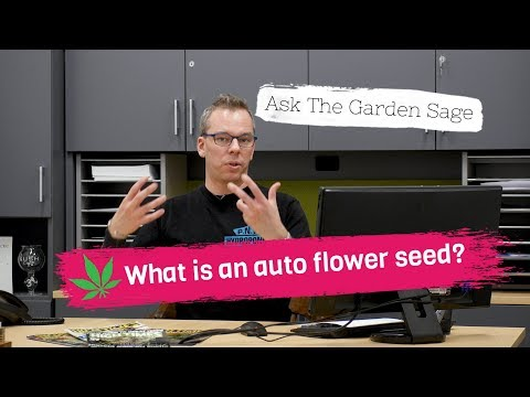What Is An Auto Flower Seed
