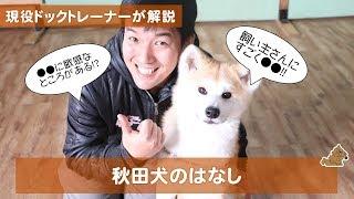 今日は飼い主さんにすごく忠実な秋田犬のお話です! 秋田犬はどんな犬?...