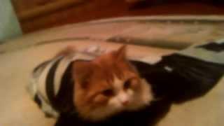 Кот закутался в одежду