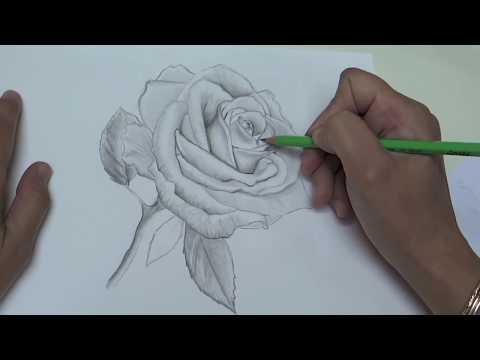 Comment dessiner une rose étape par étape - formation