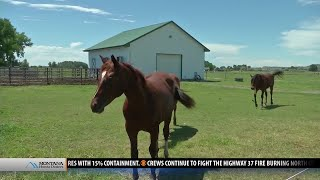 Montana Ag Network: Keeping horses healthy in summer