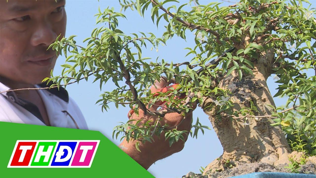 Kỹ thuật uốn nắn tạo hình cho cây cảnh nghệ thuật (bonsai) | THDT