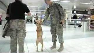 Faith the Biped Dog Visits St. Louis thumbnail