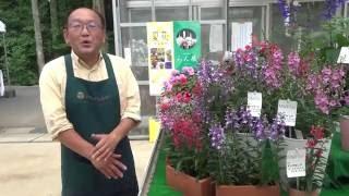 2016 千葉パックトライアル M&B Flora アンゲロニア アークエンジェル