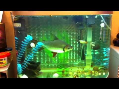 Big Fish In Small Tank Youtube