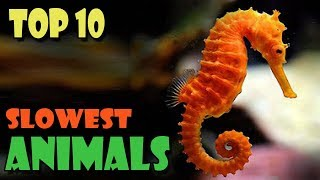 Top 10 Slowest Animals In The World    Amazing World