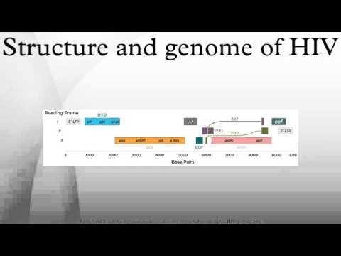 Structure and genome of HIV