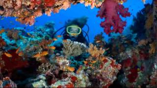 "Tupelo, MS - Dr. John Kenney - ""Your Dental Health"" - Scuba diving Thumbnail"