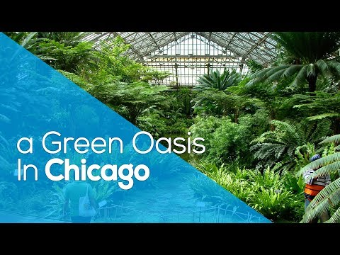 A GREEN OASIS IN CHICAGO / PARK / CONSERVATORY