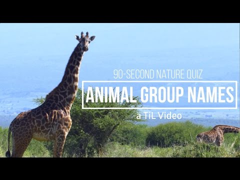 Animal Quiz! Weird names for animal groups