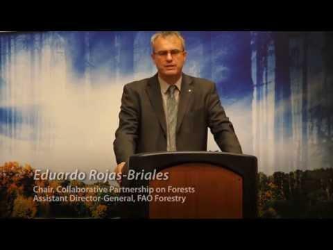 CPF Wangari Maathai Award 2014 - Eduardo Rojas-Briales
