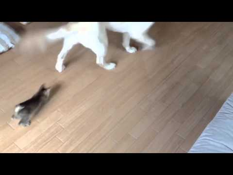 Dog Teaches Kitten How To Play
