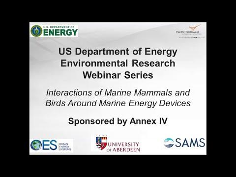 Annex IV Webinar #2: Interactions of Marine Mammals and Birds Around Marine Energy Devices