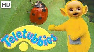 Teletubbies: Ladybirds (Beetles) - Full Episode