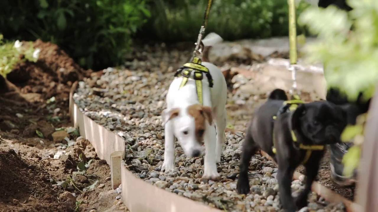 dogs trust launches first ever dog friendly garden at rhs hampton