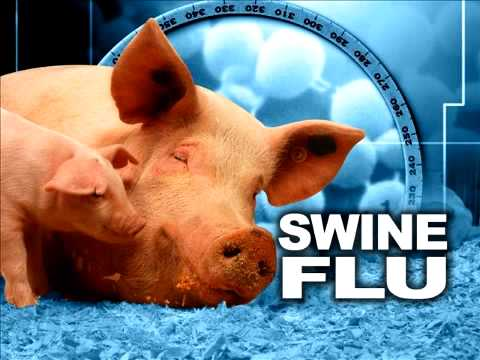 Interview with Dr. Tim O'Shea on The Swine Flu - Part 1