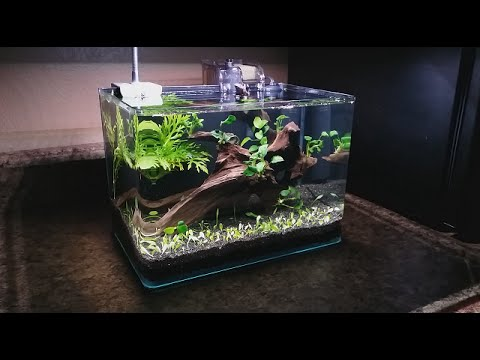3 gallon nano setup youtube. Black Bedroom Furniture Sets. Home Design Ideas