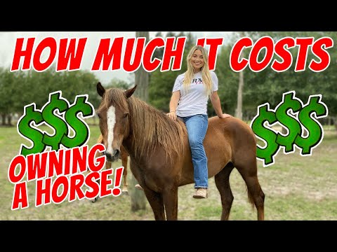 HOW MUCH DOES IT COST TO OWN A HORSE!? | DETAILED NUMBERS $$