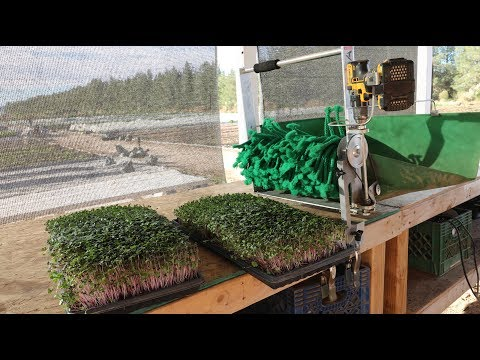 the-fastest-and-easiest-way-ever-to-harvest-microgreens