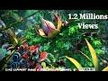 Udi Udi Jaaye | Amazing Whatsapp status Video By Prasenjeet Meshram