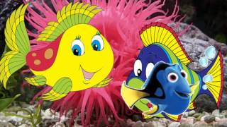 Живые цветы моря Living Flowers Sea