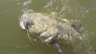 Fishing Rock Piles For BIG Flathead Catfish