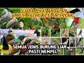 Suara Pikat Semua Jenis Burung Kecil Terampuh Burung Ribut  Mp3 - Mp4 Download