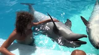 plavání s delfíny v Sharm el Sheikh 1