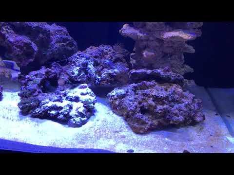 Saltwater Reef Aquarium - (Step-3) Algae Bloom!!