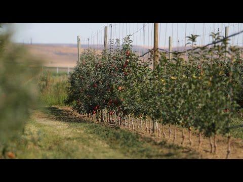 WSU Tree Fruit Endowment