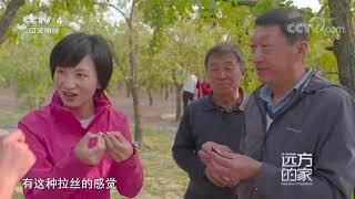 [远方的家]大运河(51) 大运河畔 红枣飘香  CCTV中文国际 - YouTube