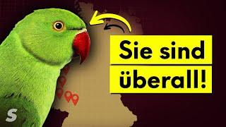 Warum Deutschland voller Papageien ist