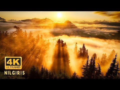 Enchanting Nilgiris - Part 1 | Ooty, Coonoor & Nilgiris Mountain Railway | Experience India