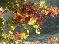 Прекрасная осень Тимур Темиров Небо над землёй минус mp3