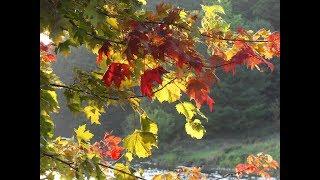 Прекрасная осень   Тимур Темиров - Небо над землёй (минус)