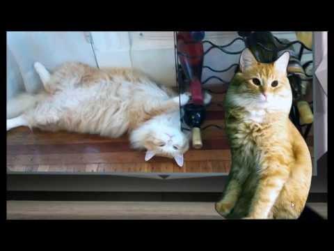 Cat President - A More Purrfect Union - Part 6 Party Cat