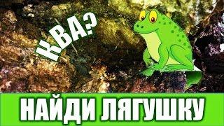 Найди лягушку на картинке Игра НАЙДИ ЛЯГУШКУ 😄 Найди всех лягушек за 10 секунд!