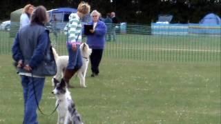 West Suffolk Dog Training Society 20090606