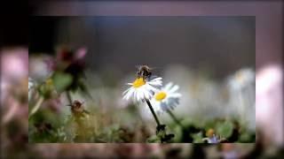 Video Om Ami Dewa Hri / Amitabha download MP3, 3GP, MP4, WEBM, AVI, FLV September 2018