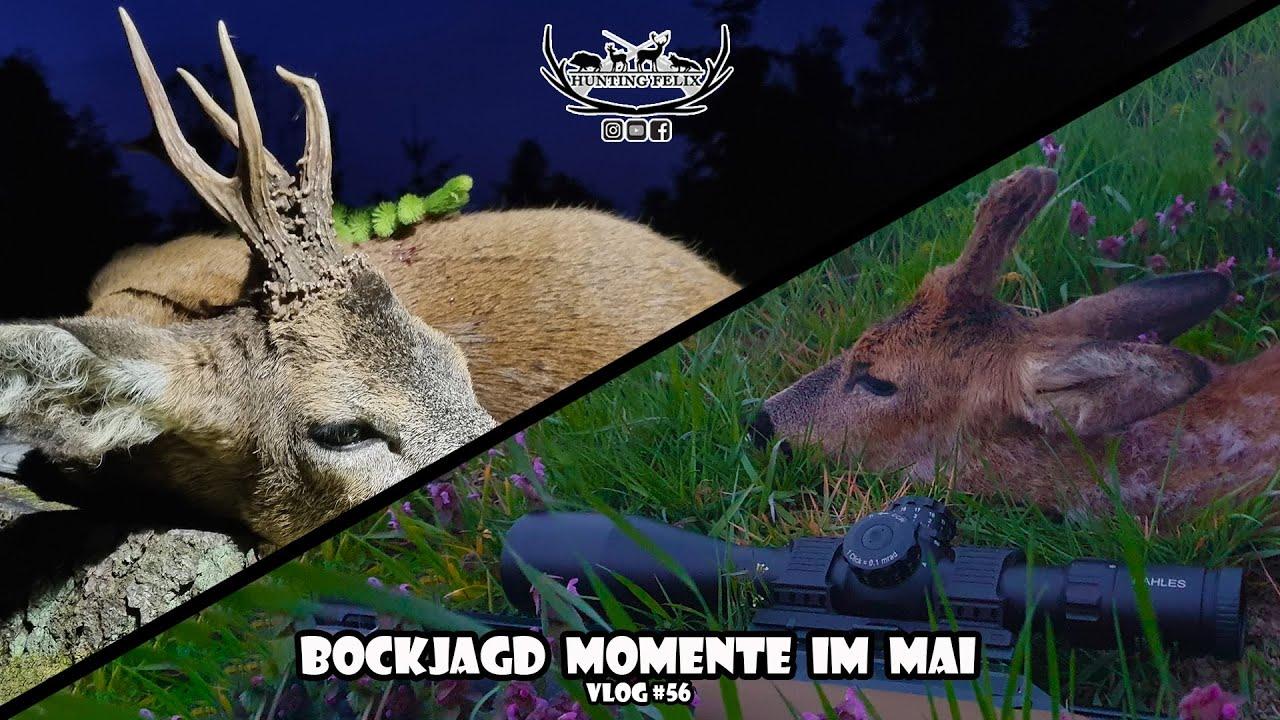 Download Bockjagd Momente im Mai
