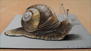 How to Draw 3D Snail - Drawing  3D Snail - Trick Art on Paper