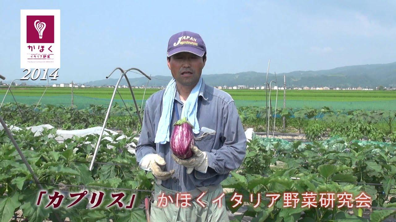 かほくイタリア野菜研究会 No.1