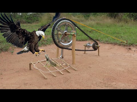 Best Creative Eagle Bird Trap Make From Technology Trap That Works 100%