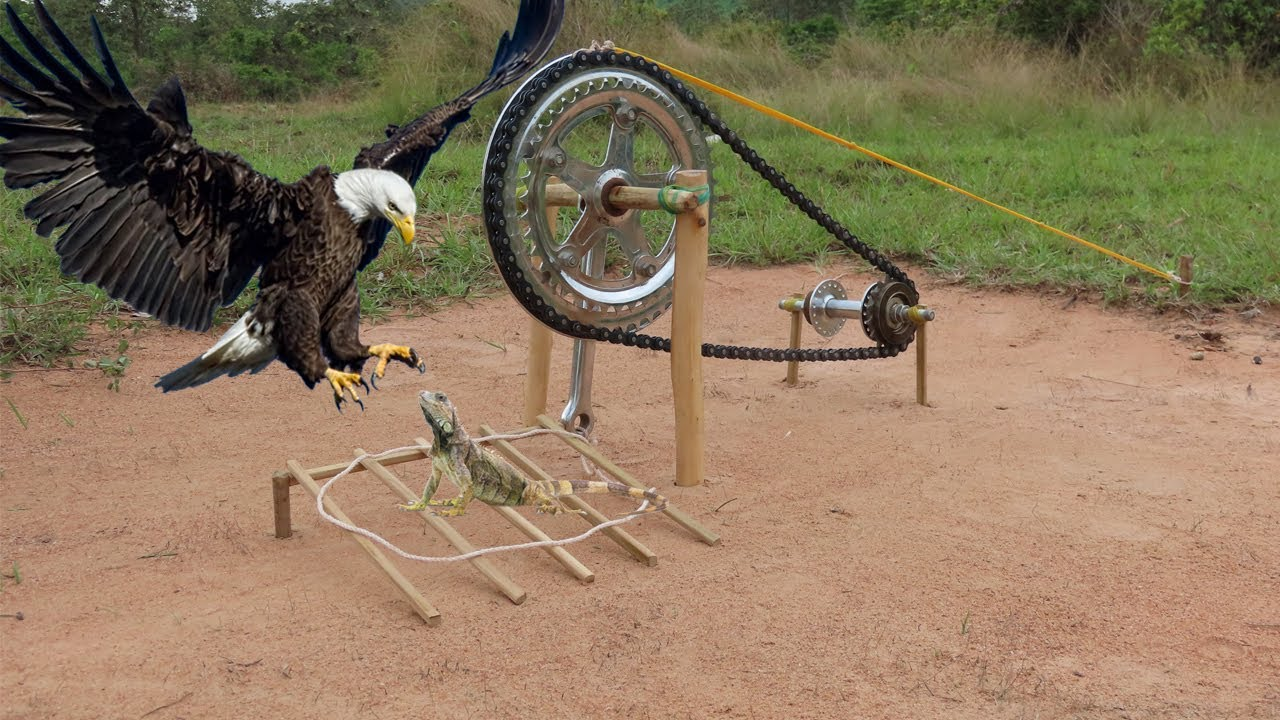 Download Best Creative Eagle Bird Trap Make From Technology Trap That Works 100%