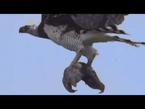 harpy eagle and sloth relationship test