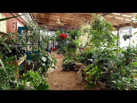 Caribbean Indoor Garden and Tropical Fish: Little Rock, Arkansas